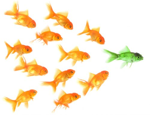 Fish leader